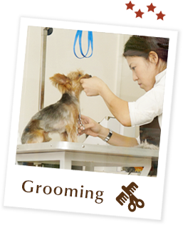 Dog Grooming Course Singapore