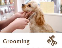 Pet salon sopra ginza singapore dog grooming spa pet for A perfect pet salon